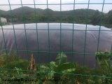 HDPE 18000m3 anaerobische Lagune-Biogas-Pflanze