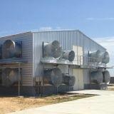 Casa de pollo de acero ligera prefabricada de las aves de corral del edificio