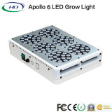 Apollo 6 LED à spectre complet grandir la lumière pour la culture en intérieur