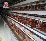 Fil d'acier Utilisation des matériaux pour la ferme avicole de la couche de la cage de poulet