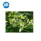 Extrait de plante de quercétine Quercétine (CAS 117-39-5)