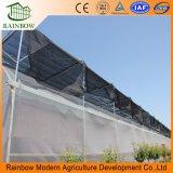 Tunnel Muti-Span Po Film couvercle en plastique Légumes Serre avec système d'ombrage