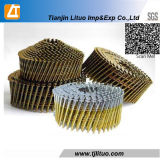 Electro Galvanized Coil Common Nail with Lmooth Shank