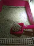 Déchets sauvages de forme de bille de bentonite pour le chat Toliet