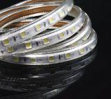 indicatore luminoso di striscia impermeabile luminoso eccellente di 60LEDs/M 110V 220V 5050 LED