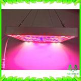 [لد] ينمو خفيفة معمل مصباح لأنّ [إيندوور بلنت] لوح [225بكس] 2835 [لد], يبنى في [1بكس] [50و] تيار ثابتة قوة إمداد تموين