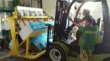 중국에 있는 스리랑카 미얀마 필리핀 밥 선반 색깔 분류하는 사람 기계