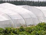 Réseau d'aphis d'insecte de couverture de serre chaude anti