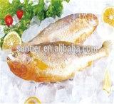 Sun уровня промышленного чешуйчатый льда для рыбного промысла и переработки рыбы