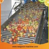 Rot wachsen Riemen-Typen die Frucht, die Förderanlagen-Maschine sortiert