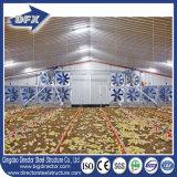 Vertiente de la granja avícola del pollo del aseguramiento del comercio de la buena calidad