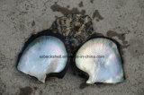 装飾材料のための黒い真珠色のシェルの原料