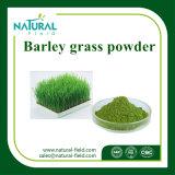 Порошок выдержки травы ячменя, чисто порошок травы ячменя, выдержка травы ячменя