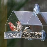 Acrílico transparente de forma única de la casa de aves alimentadores