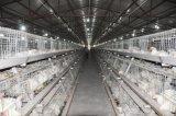 Strumentazione della gabbia del pollo da carne dell'azienda agricola di pollo da vendere (un tipo)