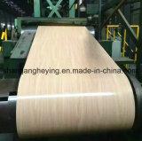 La feuille galvanisée en acier de Prited de modèle/a enduit la bobine d'une première couche de peinture en acier