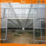 Estufa de vidro do tempo longo com estrutura de Venlo