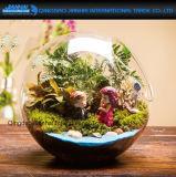 表の装飾の球のガラス花プランターつぼの陸生動物飼育器の容器