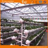 Planting Vegetables를 위한 긴 생활 Span Venlo Type 다중 Span Glass Greenhouse