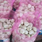 Свежие белые чеснок от происхождения на складе