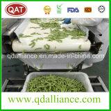 IQF Frozen None Semente de OGM com certificação HACCP Brc
