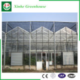 농업 또는 광고 방송 또는 정원 냉각 장치를 가진 유리제 녹색 집