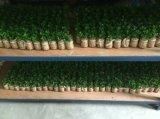 Plantas artificiales y flores de plantas suculentas