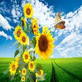 공급 일요일 꽃 색칠 다이아몬드 모자이크 DIY 다이아몬드 색칠은 단식한다