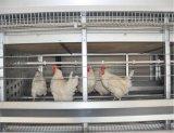 De grote Apparatuur van het Landbouwbedrijf van de Kooi van het Gevogelte van de Kip van de Kwaliteit Automatische om Kip (het frame van het type van H) Poul Tech Te kweken