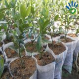 De landbouw Niet-geweven Stof van pp Spunbond voor de Dekking van Installaties en de Zak van de Bescherming van het Fruit