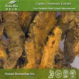 100% натуральные Coptis Chinensis корневой извлечения (5%~98% Berberine)