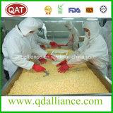 Grains superbes Witn de maïs de bonne qualité