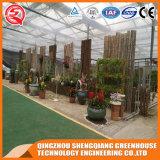 농업 다중 경간 정원 강화 유리 온실