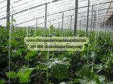 Serre solaire pour la plantation