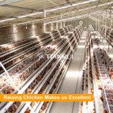Galvanisé à chaud de haute qualité d'un type Cage de la couche d'oeufs de poulet