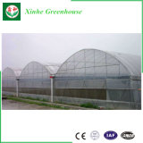 Serra di vetro di agricoltura/annuncio pubblicitario/giardino con il sistema di raffreddamento