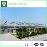 Invernadero de cristal del bajo costo del surtidor de China para el anuncio publicitario