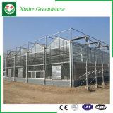 Heißes verkaufendes Handelsgewächshaus-Glasgewächshaus für Gemüse