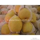 Frutas Frescas de Pêra do século chinês