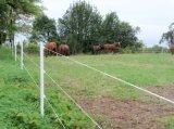 Elektrische Zaun-Energiequelle-Schaf-Zaun-Vieh-Zaun-Ranch, die für Viehbestand ficht