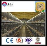 Aumento prefabricado de acero ligero famoso de la casa del pollo tomatero del chino (XGZ-GR006)