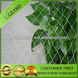 Sale를 위한 농업 HDPE Plastic Vineyard Anti Bird Netting