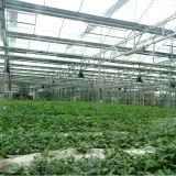 Парник большой Multi-Пяди аграрный и коммерчески стеклянный
