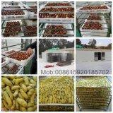 A fruta vermelha do desidratador industrial fácil do alimento da operação data máquina de secagem