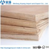 Núcleo de madeira contraplacada Comercial Okume para mobiliário