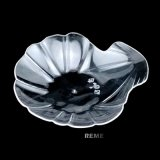 Disque en plastique Dispensable Saucer Cowry Shaped Dish