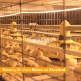 Conception Tianrui automatique des cages en batterie de poulets de chair pour 60000 poulets de chair