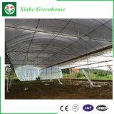 Serra agricola di luce solare completa per la vendita