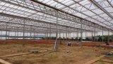 딸기 Hydropnics 큰 필름 다기능 농업 온실을 완료하십시오