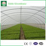야채와 정원을%s 싸게 단 하나 두 배 필름 농업 온실